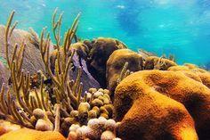 Кораллы — подводная съемка, GoPro