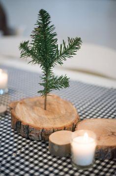 A mini tree centerpiece is a must for your camping themed party or outdoor wedding.