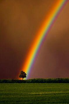 L'arbre et l'arc en ciel