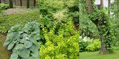 leśne byliny i pnącza na pniach drzew szybko tworzą efekt
