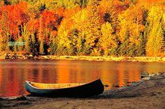 http:// Autumn Photos | Brilliant Maple leaves, romantic Ontario autumn | Free Travel Talk