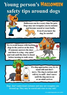 Halloween tips about dogs Halloween Cans, Dog Halloween, Halloween Safety Tips, Dog Yard, Dog Safety, Dog Training, Your Pet, Scary, Pitbulls