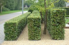 Layers of hedges