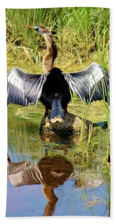 Anhinga Beach Towel featuring the photograph Drying Her Wings by Cynthia Guinn