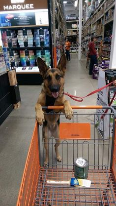 """#GSD. """"Are you sure this paint will be enough for the garage?"""""""