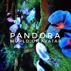 """Such an incredible morning at #Disney's newest attraction, #Pandora, #WorldOfAvatar. This is the view from inside their larger than life virtual reality ride, """"Flight of  Passage"""" - where you ride on the back of a Banshee through the jungle.  We're excited to share even more throughout the day, exclusively from #ReserveDirect! • • • #WaltDisneyWorld #AnimalKingdom #DisneyParks #Avatar #Pandora #GlobalPartnerPreview #virtualreality #ReserveOrlando #Orlando #familyfun #familyvacation…"""