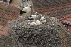 Stork's Nest in Zellenberg, France