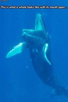 whalemouth.jpg