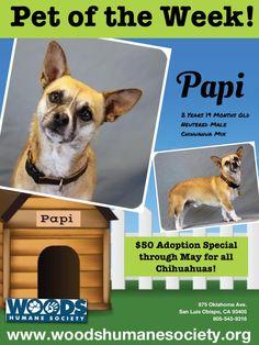 Pet of the Week! Papi