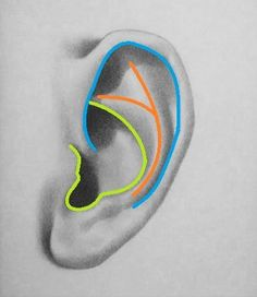 Shapes of the ear