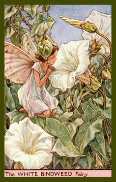 Olde America Antiques | Quilt Blocks | National Parks | Bozeman Montana : Cicely Barker Fairies - The White Bindweed Fairy
