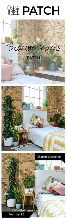 The best bedroom plants to help you sleep.  The bedroom can be transformed by house plants not just due to their appearance but also, if you choose the right ones, thanks to their capacity to cleanse the air of toxins and ultimately help you sleep better. Our selection of plants will work well for any bedroom, be it well lit or poorly lit.  Whether inside or outside your home or office, Patch helps you choose the best plants for you, delivers them to your door and helps you look after them…