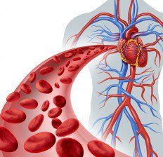 With age the body becomes more sensitive, and there are many health problems, including poor circulation. Weakened blood vessels and a lot of sitting are the main factors that contribute to poor circulation. Cholesterol Lowering Foods, Poor Circulation, Improve Blood Circulation, Heart Circulation, Vitamin K Deficiency, Anemia, Pulmonary Hypertension, Blood Pressure Remedies, Hibiscus