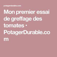 Mon premier essai de greffage des tomates • PotagerDurable.com