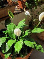 Casa Adorada: Plantas ideais para ambientes internos