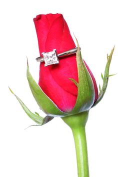 Get a Perfect Diamond Engagement Rings in Gold and platinum with many cuts like Marquis, Princess, Radiant & Emerald Cut Diamond Rings for Women. Diamond Rings, Diamond Engagement Rings, Diamond Cuts, Jewelry Insurance, Emerald Cut Diamonds, Red Roses, Vintage Jewelry, Image, Silver