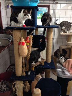 """See 49 photos from 414 visitors about kittens and pets. """"Get you kitty fix here! Kinds Of Cats, Four Square, Holland, Amsterdam, Cat Lovers, Presents, Boat, Pets, Antiques"""