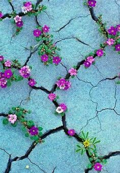 I wonder if someone intentionally planted these flowers in the cracks, or they just grew there on their own like that. It would be cooler if it were the second option.