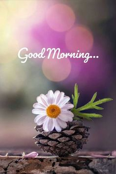 Good Morning Friends Images, Positive Good Morning Quotes, Latest Good Morning Images, Good Morning Beautiful Pictures, Good Morning Nature, Good Morning Images Flowers, Good Morning Photos, Good Morning Love, Morning Pictures