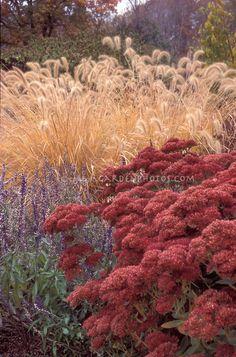 Sedum 'Autumn Fire', Salvia farinacea, & Pennisetum alopecuroides ornamental grass in fall autumn garden planting combination of russet color theme tones, annuals and perennials, fall foliage