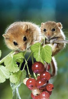 Mama and baby mouse find a treat.