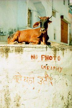 65 ideas travel photos india colour for 2019 India Travel, Tourism India, Nature Photography, Travel Photography, Indian Photography, Mother India, Amazing India, Rural India, India People