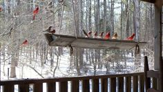Bird feeder trough is made of two planks of wood hung with rope.