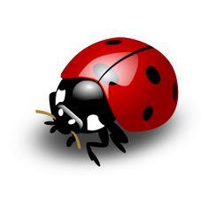 Résultats Google Recherche d'images correspondant à http://lady-bug.sourceforge.net/images/ladybug256.png