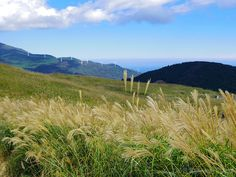 ススキの黄金の野 (The golden field at Hosono Plateau) #Japan #District #Autumn