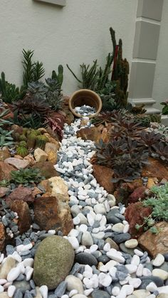 My latest rock garden with dry stream bed.