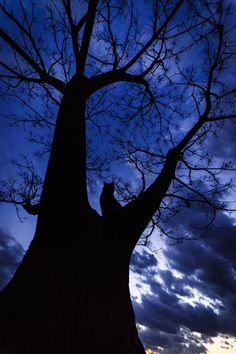 """mariusu: (via / Photo """"mystery� by Seiji Mamiya) Silhouette Photography, Art Photography, Crazy Cat Lady, Crazy Cats, Statues, Cat Tree, Cool Cats, Shades Of Blue, Night Skies"""