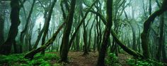 Mossy Forest | Canary Islands, Spain | by Kilian Schöenberger | via 500px