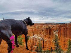 Looks like Lady Bug has a lot to explore with her custom knee brace.