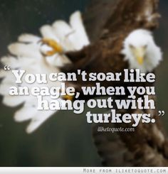You can't soar like an eagle, when you hang out with turkeys. #inspirational #quotes