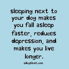Quotes about dogs. Sleeping next to your dog makes you fall asleep faster, reduces depression, and makes you live longer. Sleeping next to your dog can benefit in so many ways. I Love Dogs, Puppy Love, Cute Dogs, Pet Sitter, Animal Quotes, Animal Signs, Golden Retrievers, Golden Retriever Quotes, Dog Mom