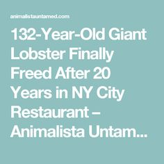 132-Year-Old Giant Lobster Finally Freed After 20 Years in NY City Restaurant – Animalista Untamed