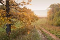 Russian autumn in the country
