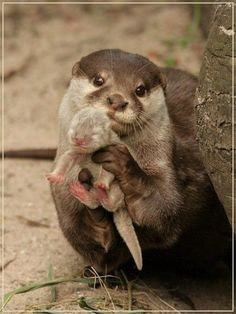 An otter mom is showing you her puppy.