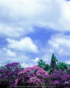 Nature - Used Canon EOS Rebel XSi  Lightroom 5  Personal Presets - #nature #natureza #naturephotography #photography #fotografia #plants #garden #vsco #ronaldoichi #vscofilm #instagramers #摄影 #色彩 #カメラマン #フォトグラフィー #写真 #自然 #植物 #nature2017