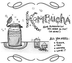 Kombucha for Beginners – Hot & Sour Blog