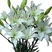 $96.98  Asiatic (LA) Lilies - White - 80 Stems - Sam's Club