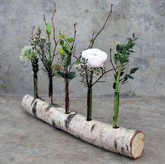 Use a birch trunk as a vase. White birch trunks are here birendendoc : Use a birch trunk as a vase. White birch trunks are here birendendoc … The post Use a birch trunk as a vase. White birch trunks are here birendendoc appeared first on Dekoration. Flower Decorations, Wedding Decorations, Christmas Decorations, Deco Floral, Floral Design, Wood Crafts, Diy And Crafts, Deco Champetre, Deco Nature
