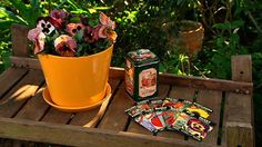 Gardening: sowing heirloom seeds