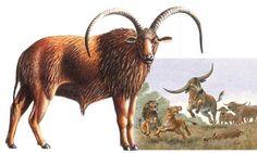 Pelorovis Monstrous Sheep