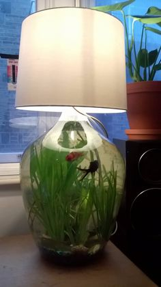 Our fish tank that also functions as a lamp.