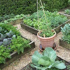 Foto: Organic Vegetable Gardening For Beginners - 7 Tips You Heard & Forgot.    Read This =(http://cutt.us/cEim)  The ultimate Take-You-By-The-Hand beginners gardening manual for creating and managing your own organic garden. http://amzn.to/UuieJq