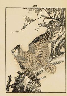 "Japanese Antique Original Woodcut Print Imao Keinen ""Japanese cypress Horned owl"""