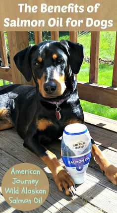 Do you know the benefits of salmon oil for dogs? Find out more! #sponsored Dog Mom | Dog Products | Life with Dogs | Rescue Dogs