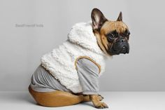 Toy Puppies, Bulldog Puppies, Pug, Dog Backpack, Winter Vest, Dog Hoodie, Warm Sweaters, Dog Coats, White Hoodie