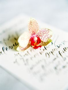 Lettering and paper design by Feast Fine Art and Calligraphy   Photography by Jasmine Pettersen